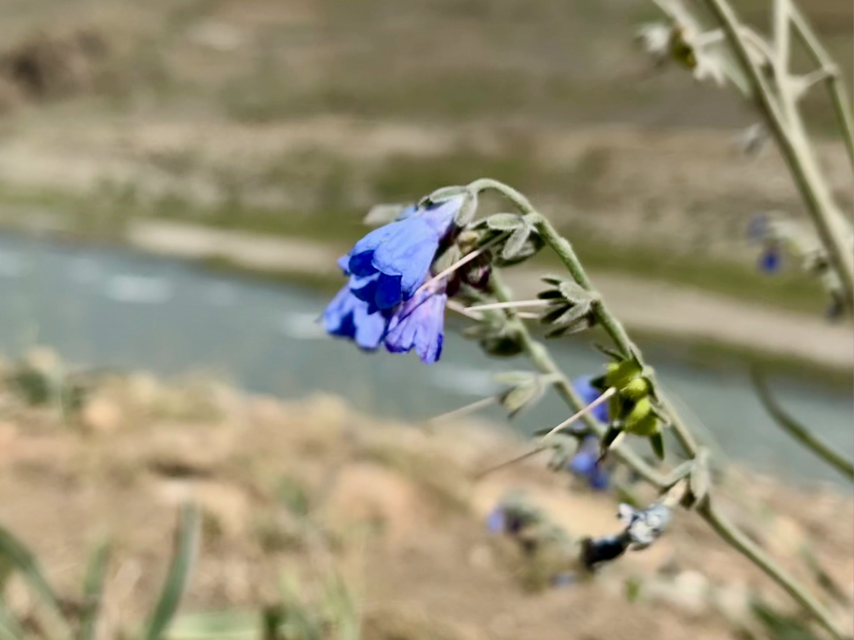 small flower banks of a river in the desert in Ladakh